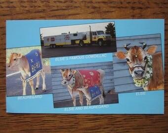Vintage Postcard, Elsie the Cow, Beauregard, Cowdillac, Borden Marketing Postcard, American Symbols, Advertising History, Retro Kitsch,Humor