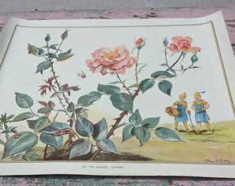 Vintage British school poster. Flowers, gnomes and ladybugs!
