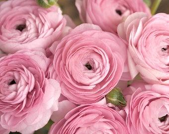 Floral photography pink ranunculus, dusty pink flower artwork, cottage chic decor, large wall art, bedroom art for her living room print