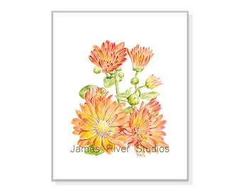 Chrysanthemum Art Chrysanthemum Print Chrysanthemum Decor Yellow Orange Mums Painting Mums Art Mums Wall Art Flower Floral Watercolor Print.