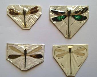 UNMOUNTED 4 x Odonata Mix - Taxidermy - Ready to spread