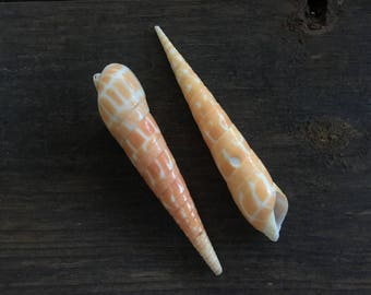 Beautiful Auger shells, lot of 2 surf tumbled