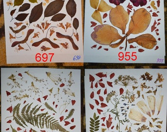 Real pressed leaves and flowers #697 #955 #947 #963