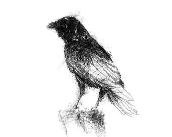 Common raven | Limited edition fine art print from original drawing. Free shipping.