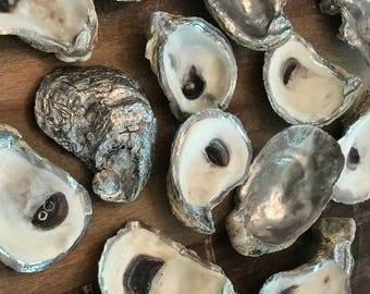 Silver Rim Oyster Shells, Wedding, Bridesmaid, Coastal, Decor