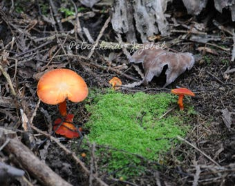 Mossy Patches and Orange Friends (Forest Photography)