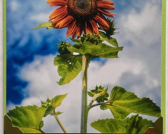 Happy Skies Sunflower Photo Pop Out Note Card