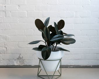 Low Tri Plant Stand in Eucalyptus