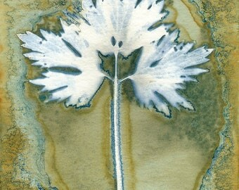 Original Unique Botanical Art Cyanotype Print of a Buttercup Leaf
