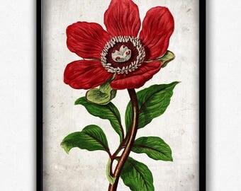 Peony Red Flower Vintage Print - Flower Poster - Flower Art - Flower Picture - Home Decor - Home Art - Living Room - Living Room Art