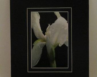 Iris # one (photo)