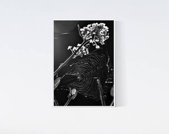 5x7 floral print - Flower prints - black and white photography - artwork, photo, wall art, decor, living room, bedroom, flowers, macro