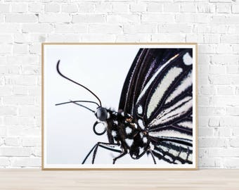 Bold Butterfly Print |  Butterfly Printable Art |  Instant Download |  Butterfly Photography | Butterfly Art | Monochrome Art