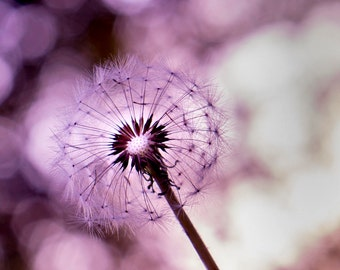 Purple dandelion print, fine art dandelion photography, dandelion art, surreal dandelion photo, dandelion wall art, dandelion photo