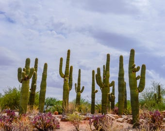 Saguaro Family Cactus Desert Landscape Photography Digital Download