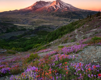 Summer Flowers with Mt. St. Helens Sunrise |  Pacific Northwest Photography | Print | Metal, Canvas, Lustre