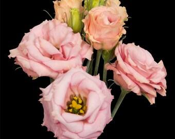 Fresh Lisianthus, Wedding centerpieces, wedding bouquets, Apricot, weddings, wedding arrangements, table centerpieces