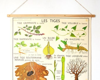 Poster on the theme of the stems and roots vintage school. Published by Rossignol.