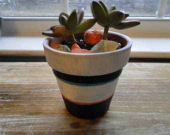 Double alpenglow succulent