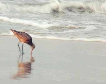beach photography, bird photograph, soft sea, nautical pale silvery blue seaside, nursery art, peaceful waves sand piper 5x5