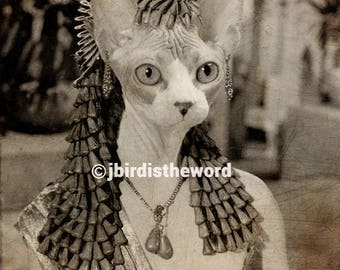 Cleocatra, Cleopatra, Egyptian, Egypt, Sphinx, Sphynx, Ancient Egypt, Bohemian, Sphinx Cat, Sphynx Cat, Cat Art, Cat Print, Egyptian Art