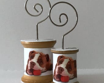 Pit Bull Terrier2 - Cool Spools