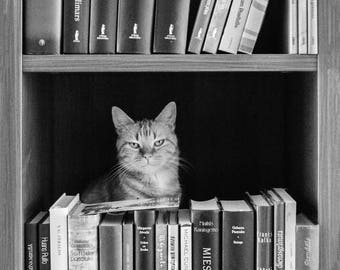 Cats love books - b/w - Postcards for Postcrossing