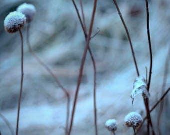 Winter blues, 8x10 fine art color photograph