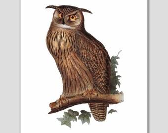 "Eagle Owl Art, Bird Print (Den Artwork, Woodland Home Decor) -- ""Bubo Maximus"" 19th Century Artist"