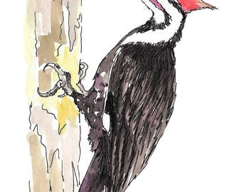 Pileated Woddpecker.  Matted Print from the Original Watercolor Painting
