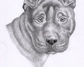 Sharpei Dog - Pencil Portrait Original Art, Great for Dog Lovers, Sharpei Owners, Ready to Frame, Shar Pei Breed