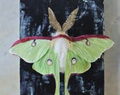 Luna Moth / Faux Taxidermy / Paper Taxidermy / Moth Faux Taxidermy / Paper Wall Art / Moth Wall Art / Fake Taxidermy / Paper Moth / Moth Art