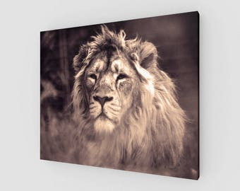 Canvases, The Lion King