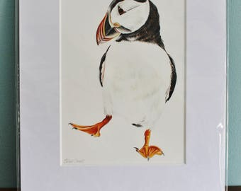Puffin Bird Watercolour Painting - Sea bird picture - Mounted Puffin giclee print - Puffin Art Poster - Picture and gift for the home