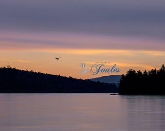 Loon of the Lake ~ Lake Winnipesaukee, New Hampshire, Mountain, Ice, Art, Artwork, Photograph, Joules, New England, Loon, Winter Scenes