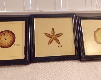 Sea Shell Botanical Prints Set of Three