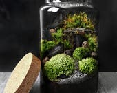 Woodland Moss Terrarium in Large Glass Jar Easy Houseplant