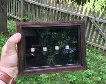 Termite Identification Display - Taxidermy Preserved Specimen