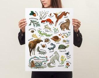 ABC Alphabet Wilderness - 18x24 Art Poster