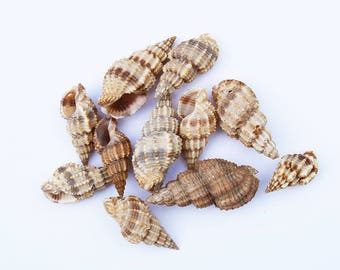 10 x Natural Shell Beads Pendants Random Mix of Sizes 10~40mm, Hole 1mm