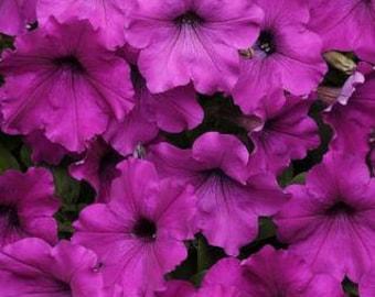 100 Bulk Petunia Seeds Easy Wave Violet F1 Pelleted Seeds