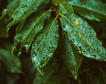 Macro Leaves in the Rain Photography Decor
