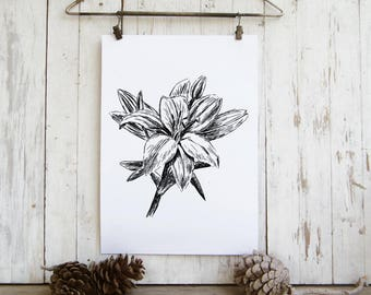 Lily Illustration, Black and white flower print, Printable wall art,  Modern A4 Art print, Teen room decor, Hostess gift