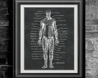 Human Anatomical Plate Poster Human Anatomy Wall Art Human Body Art Human Muscle Poster Human Organ Poster Anatomy Art Gift 4 Pre Med PP9189