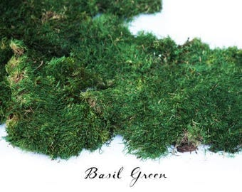 2.5 lb Preserved Moss in Dark Green. 2 colors to choose from.