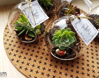Globe Glass Succulent Terrarium, Succulent Wedding Favours, Wedding Bombonieres, Wedding Favours, Succulent Plants