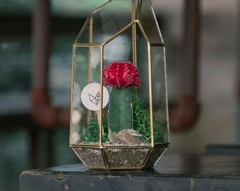 Large Gold Glass Moon Cactus Terrarium Greenery Kit
