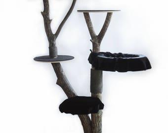 Nature tree wood • Besakih