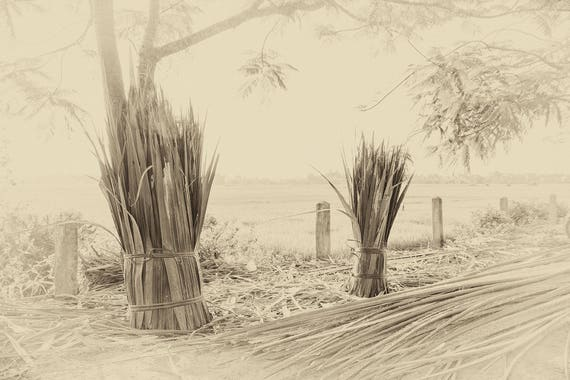 THE HARVEST. Vietnam Prints, Travel Photography, Countryside Picture, Sepia Tone, Limited Edition Print, Giclee Print