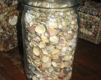 One Quart Canning Jar Full of Hundreds of Small Shells for Arts & Crafts